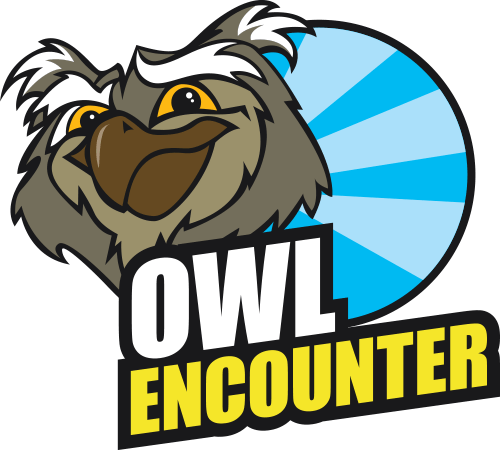 Owl Encounter
